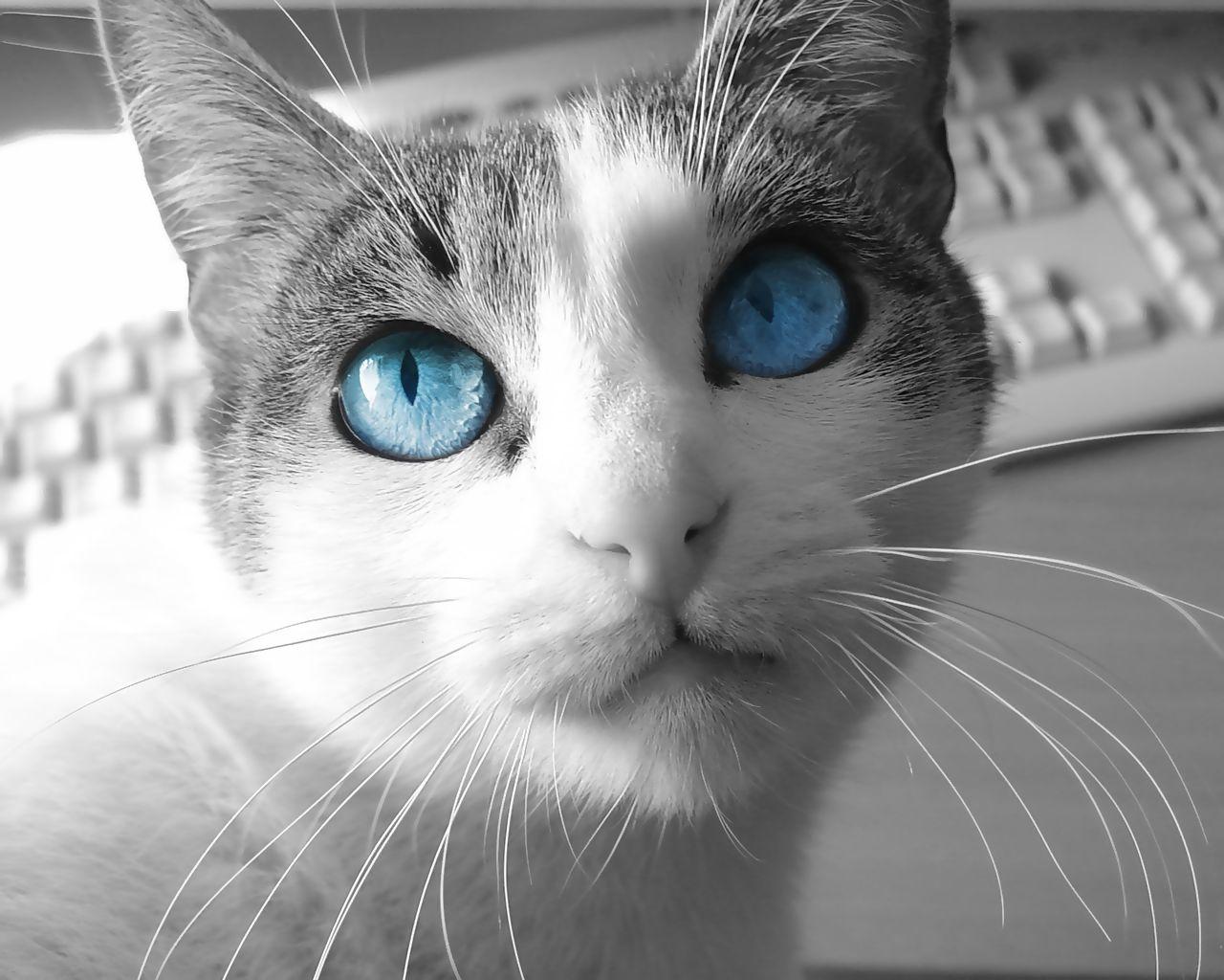 かっこいい猫画像まとめ30選 ねこマイスター