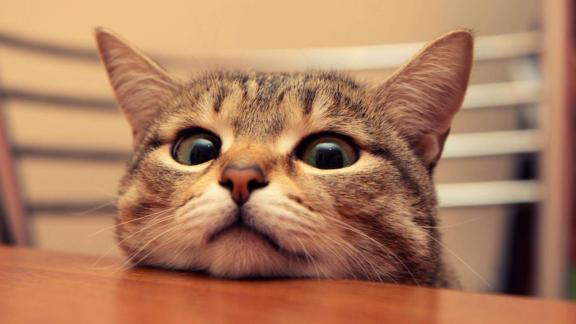 可愛い猫の壁紙画像まとめ 1920 1020px ねこマイスター