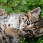 子猫を飼う時の注意点