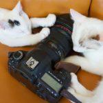 猫のフリー素材・画像30選まとめ【無料で利用可能なサイトもご紹介します】