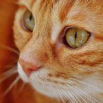 猫がくしゃみや咳する原因はなに?【考えられる病気と心配ない症状の見分け方】
