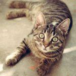 猫のiphone7ケースおすすめ20選【おしゃれでかわいい♪】
