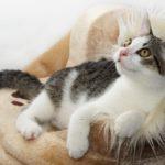 猫のiphoneX ケースおすすめ20選