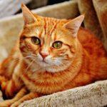 猫を飼うならオスとメスどっちがいいの?【違いを多方面から解説します】