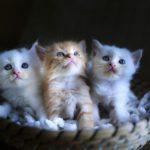 猫モチーフのチョコおすすめ15選【可愛くお洒落なスイーツ】