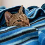 猫柄の可愛いブランケットおすすめ30選【寒い日もぬくぬく♪】