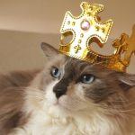 猫の種類人気ランキングベスト30 【2020】