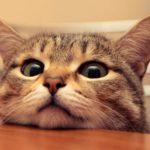 可愛い猫の壁紙画像まとめ【1920×1020px】