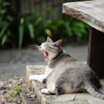 【どうして?】猫があくびをする3つの理由、病気との関連