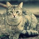 かっこいい猫画像まとめ30選
