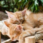 可愛い人気の猫の種類・品種10選!【性格や相場もご紹介します】