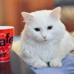 猫モチーフのマグカップ20選【いつもの一杯がきっともっと美味しくなる!】