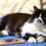 デートにおすすめの猫カフェ6選【2人の距離がぐっと近づく!】