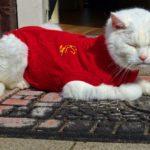 猫好きにおすすめパーカー厳選10選【めずらしいアイテムで注目間違いなし!】