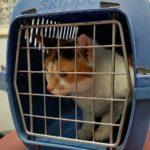 猫のおすすめキャリーバッグ10選【使いやすくてお洒落なものをご紹介します】