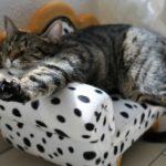 人気の猫グッズ!おすすめ商品20選【自分用にもプレゼントにもおすすめ】
