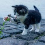 可愛い猫画像まとめ30選