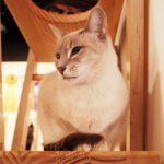 猫と心地よく暮らすおしゃれなインテリア10選【猫も喜ぶ快適空間を作るために】