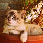 猫のデザインのお菓子・スイーツ20選まとめ【猫好きな方へのお手土産に】