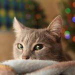 プレゼント用に最適な猫アクセサリー10選【誕生日や記念日におすすめ】