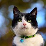 猫の首輪に迷子札やGPSを付けるメリットやデメリットは?【種類やおすすめもご紹介します】