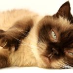 猫の仕草で分かる、意味や猫の気持ち【姿勢やしぐさから読み取れる】