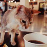 東京都内でおすすめな猫カフフェ15選【癒し空間でリラックス♪】