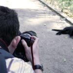インスタでフォローしたい猫アカウント20選【人気のアカウントをご紹介します】